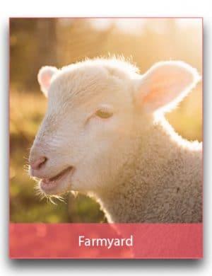 Farmyard Party